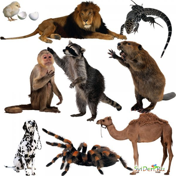 Clipart - Animals