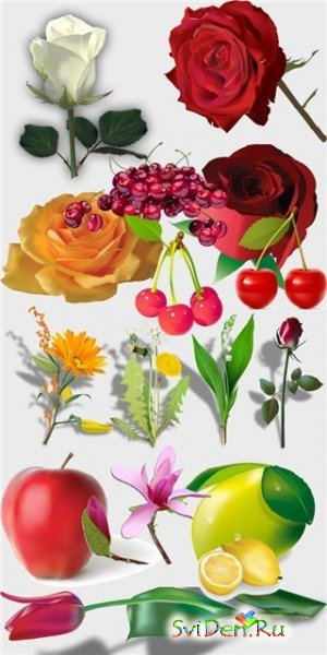 Vector flowers and fruit