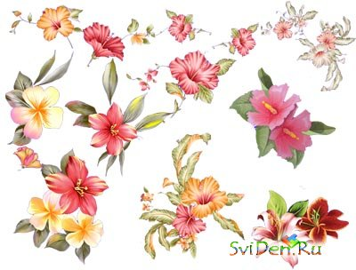 PNG clipart - Flowers