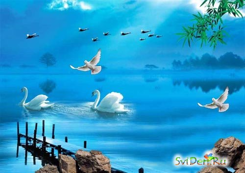 White swans on a pond (a multilayered source code for a photoshop)