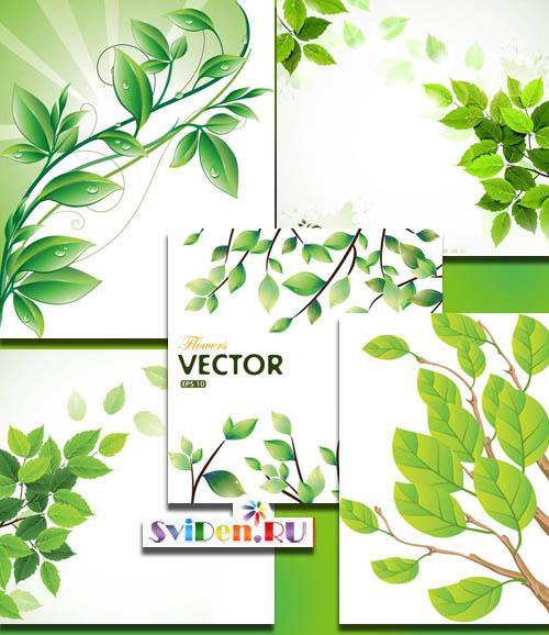 зеленые листья иллюстрация, ветка, весна ветка, лист, клипарт ... | 578x500
