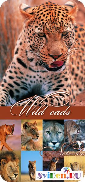 Wallpapers  -  Wild Cats