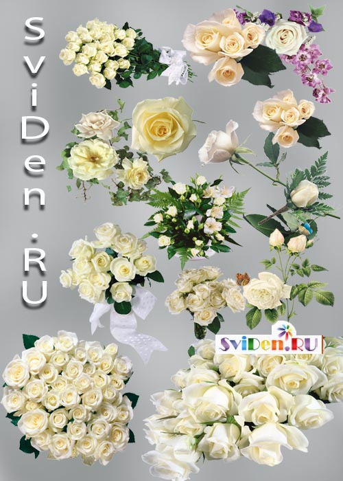 Клипарты фотошопа белые розы
