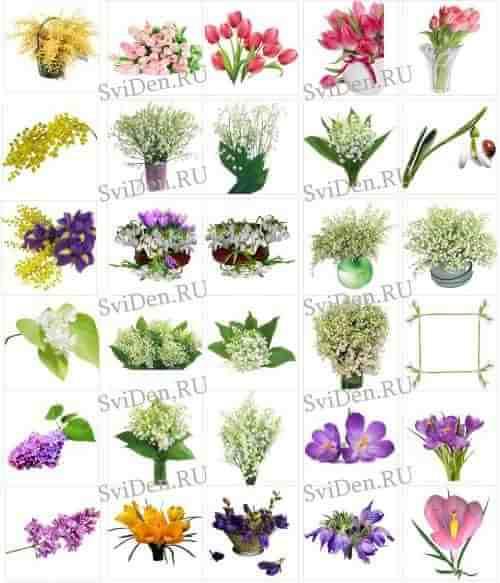 Весенние цветы - прозрачный фон - цветочный клипарт