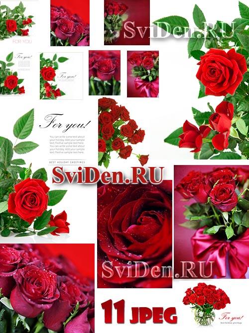 Красные розы - Благоухающий растровый клипарт