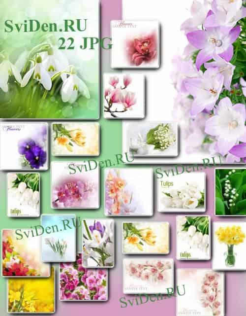 Весенние цветы - Невероятная нежность - Растровый клипарт