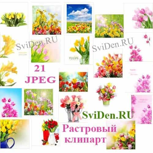 Тюльпаны - Разноцветный растровый клипарт