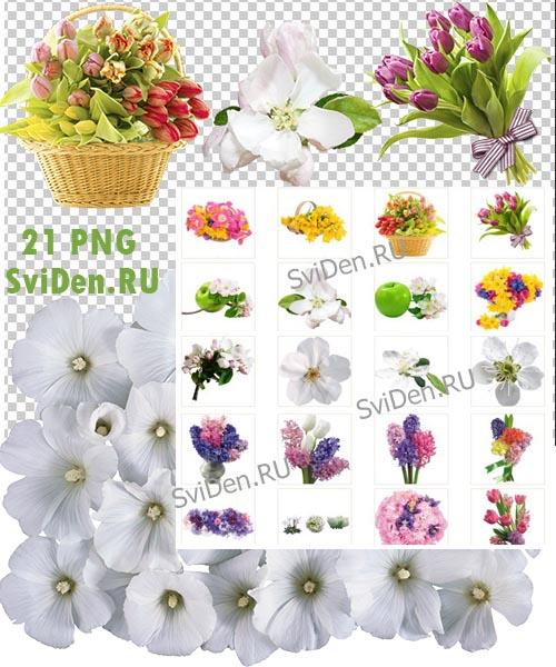Весна цветочный PNG клипарт фон прозрачный