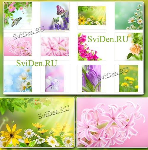 Растровый клипарт - Весенние цветочные фоны бесплатно