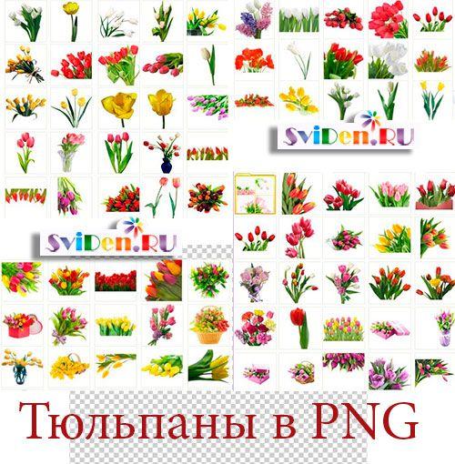 Тюльпаны - Невероятно-красивая PNG мегаколлекция